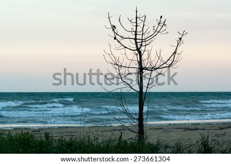 view of sea, sand beach with tree in the evening, sea tide, natural photo, wet sand and waves, Bibione, Italy
