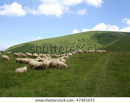 View of sheep farm in New Zealand.
