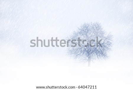 View of single tree through snowing and fog. Blue tone. Rural landscape.