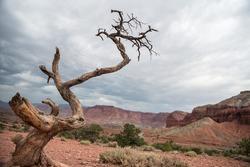 View of singular tree in Capitol Reef National Park Utah.