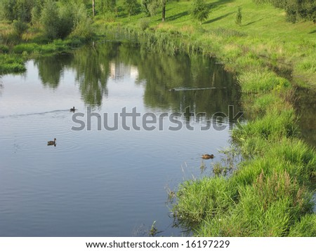 View of summer river with swimming ducks, Moscow