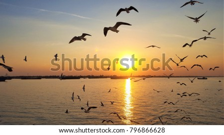 View of sunset at Yangon River with lots of silhouette flying seagulls looking through the river cruise, Winter in Yangon Myanmar. #796866628