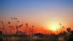 view of sunset through dry grass. blue and red sky