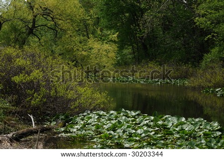 View of swamp in springtime, with emerging foliage, vegetation, and lilly blossoms.