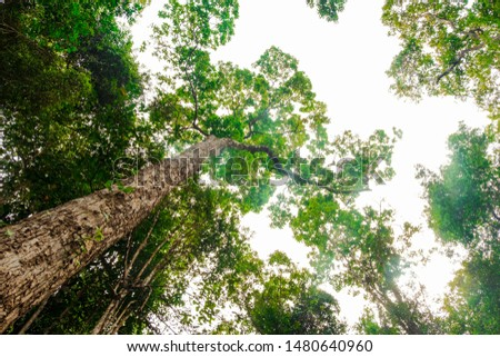 View of tall and tall trees in the tropical forests of Thailand #1480640960