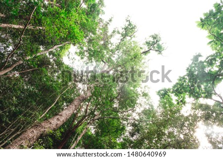 View of tall and tall trees in the tropical forests of Thailand #1480640969