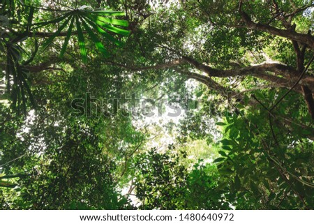 View of tall and tall trees in the tropical forests of Thailand #1480640972
