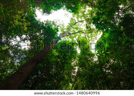 View of tall and tall trees in the tropical forests of Thailand #1480640996