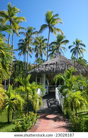 View of tall coconut palm trees and gazebo at a beautiful tropical resort
