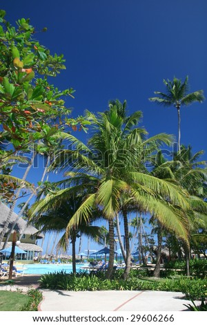 View of tall coconut palm trees at a beautiful tropical resort