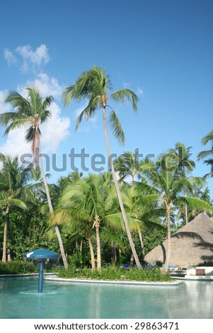 View of tall coconut palm trees at a beautiful tropical resort, poolside