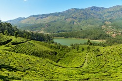 View of tea plantation valley and Madupetty Dam in Munnar. Kerala. India