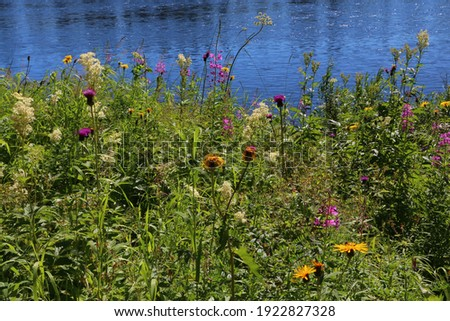View of the blooming lake shore with tall green grass and wildflowers yellow crimson illuminated by sunlight on a summer day on a blue water background stock photo