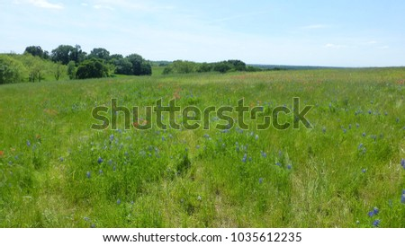 View of the Bluebonnet and Indian Paintbrush blooming flowers in the Texas Hill Country #1035612235