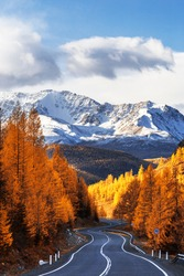 View of the Chui tract, autumn taiga, snow-capped mountain peaks. Altai Republic, Russia