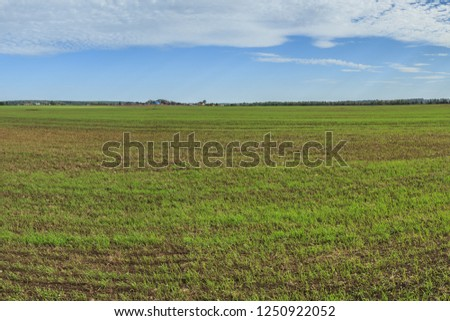 View of the field with winter crops in early autumn #1250922052