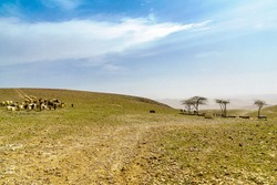 View of the Gorny observation point, with sheep and donkeys, in Arad, Southern Israel