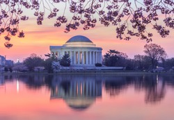 View of the Jefferson Memorial illuminated in the pre-dawn hour and reflecting in the Tidal Basin in Washington, DC during the cherry blossom bloom in spring.