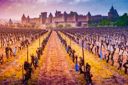 View of the medieval city of Carcassonne from a vineyard, Languedoc-Roussillon, Aude, Occitanie, France
