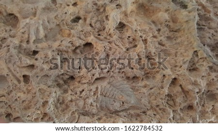 View of the natural store texture with some fossilised insect print.