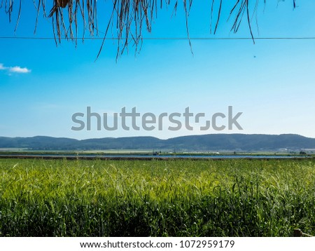 View of the nature  in the countryside of Israel