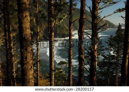 View of the Oregon coast seen through the trees.