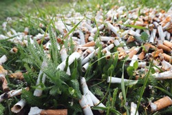 View of the pattern of scattered cigarette butts in the green grass on the meadow in the park of a big city. The problem of humanity. Smoking cigarettes, bad habit of man. Nicotine addiction. Garbage