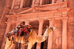 view of the petra treasury with camel in foreground