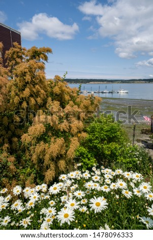 View of the shoreline with daises and wildflowers near the Coupeville Wharf on Whidbey Island in Washington State