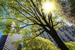 View of the skyscrapers of Manhattan through the trees on Madison Square Park in New York City