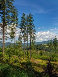 View of the slopes of the Silesian Beskids, Remains of a spruce forest, Poland