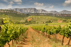 View of the south face of the Sainte Victoire mountain from the vineyard