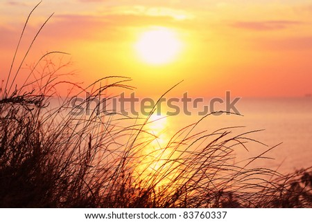 View of the sunrise from grassy cliff