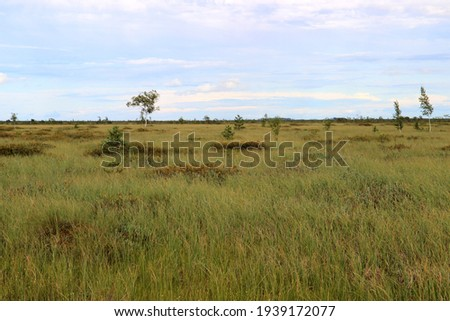 View of the vast plain of the upper swamp overgrown with low dense swamp vegetation, flowers and grasses. Yelnya swamps in Belarus near the city of Miory. Gorgeous colors of nature in summer evening