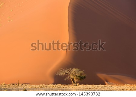 View of tree near dune in Sossusvlei park of Namibia