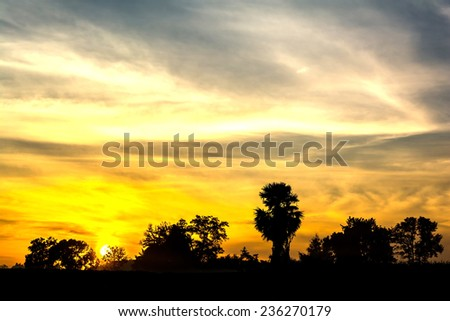 view of tree silhouettes and sky with cloud in the morning #236270179