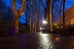 View of trees in a rainy day, Rosseti park, Trieste