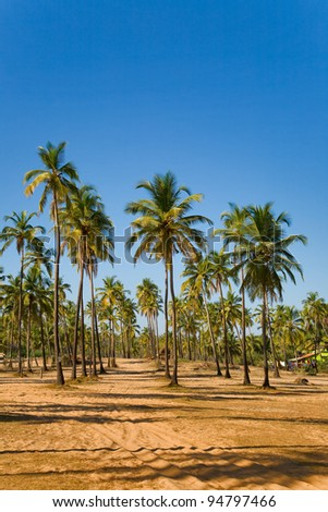 View of tropical beach with coconut palm trees growing on the sand