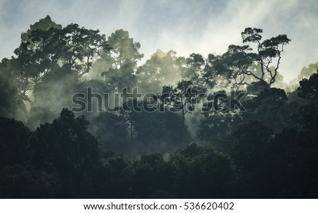 view of tropical forest, Khao Yai National Park, Thailand #536620402