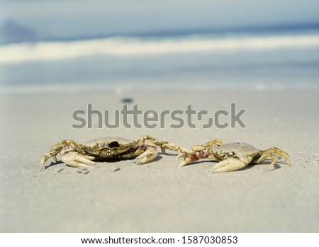 View of two crabs on the beach