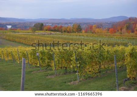 view of vignoble ste-petronille in ile d'orleans of quebec, canada