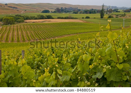 View of vineyard countryside in Marlborough New Zealand