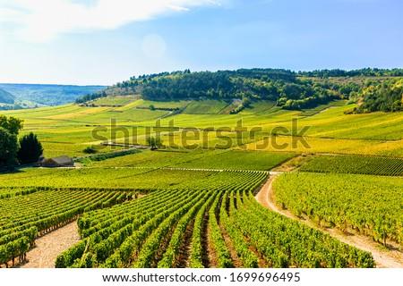 View of vineyards, in Burgundy, France Foto stock ©