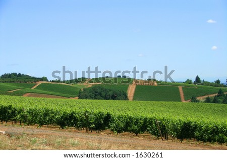 View of vineyards with blue sky as background