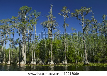 View of watercourse with bald cypress trees