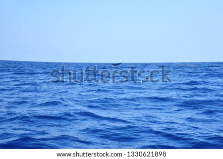 View of whale's tale over on deep blue ocean, texture of sea with waves and blue sky, clear weather in summer vacation have blue whale in the sea, summer holiday with aqua live background concept