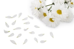 View of white flowers on a white background