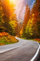 View of winding road. Asphalt roads in the Italian Alps in South Tyrol, during autumn season. Autumn scene with curved road and yellow larches from both sides in alp forest. Dolomite Alps. Italy