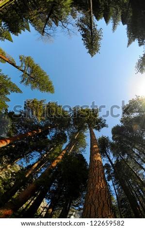 View of Yosemite national park. California, US