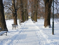View on an empty alley covered with snow in the Bialopradnicki Park in Cracow, Poland, on a sunny winter day. Selected focus.